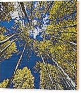 Circle Of Aspen Wood Print
