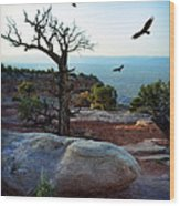 Circling Vultures Wood Print
