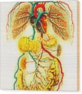 Circulatory System Wood Print