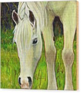 Cisco Sees Horse Art Wood Print