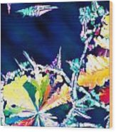 Citric Acid Microcrystals Color Abstract Art Wood Print