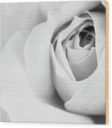 Citrine Rose Bw Palm Springs Wood Print