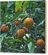 Citrus Sinensis Wood Print