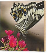 Citrus Swallowtail  Wood Print