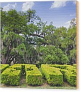 City Park New Orleans Louisiana Wood Print