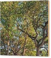 City Park Oaks Wood Print