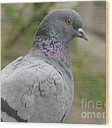 City Pigeon Wood Print