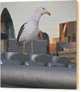 City Seagull Wood Print by Stephen Norris