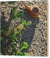 City Snail From Above Wood Print