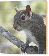 City Squirrel On The Hunt Wood Print by Belinda Lee