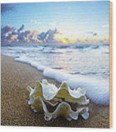 Clam Foam Wood Print by Sean Davey