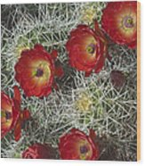 Claret Cactus - Vertical Wood Print by Gregory Scott