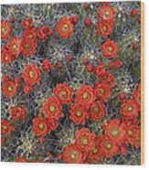 Claret Cup Cactus Flowers Detail Wood Print