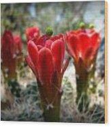 Claret Cup Summer Blooms Wood Print