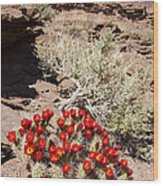 Claret Cups And Jug Handle Arch Wood Print