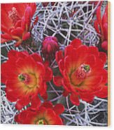 Claretcup Cactus In Bloom Wildflowers Wood Print