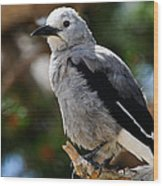 Clark's Nutcracker Wood Print