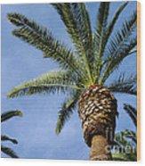 Classic Palms Wood Print