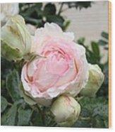 Classic Rose Wood Print