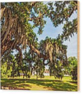 Classic Southern Beauty 2 Wood Print