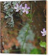 Claytonia And Rust Wood Print