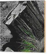 Clean Cut Sc Wood Print