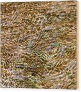 Clean Stream 2 - Featured 3 Wood Print by Alexander Senin