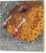 Cleaner Shrimp On Sea Cucumber Wood Print