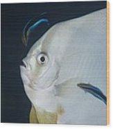 Cleaner Wrasse On Batfish Wood Print