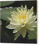 Clear Yellow Water Lily And Bud Wood Print