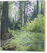 Clearing In Spring Wood Print