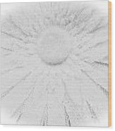 Clearly White Daisy Wood Print
