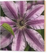 Clematis And Leaf Wood Print