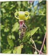 Clematis Bee-auty Wood Print