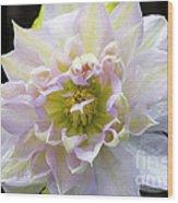 Clematis 'belle Of Woking' Wood Print