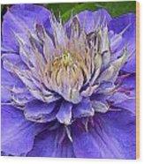 Clematis Blue Wood Print