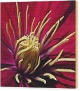 Clematis Center In Oils Wood Print