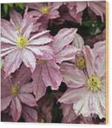 Clematis First Lady Wood Print