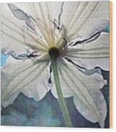 Clematis In Morning Sun Wood Print