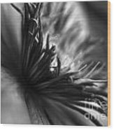 Clematis Macro In Black And White Wood Print