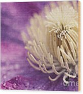 Clematis-macro Photograph Of A Purple Clematis Wood Print