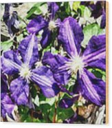 Clematis On A Stone Wall Wood Print