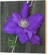 Clematis On A String Wood Print