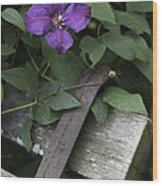 Clematis On Bench Wood Print
