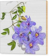 Clematis Wood Print