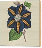 Clematis Star Of India Wood Print