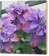 Clematis Vyvyan Pennell Wood Print