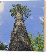 Climb To The Sky Wood Print