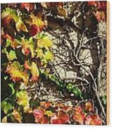Climbing Color Wood Print