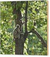 Climbing Lessons Wood Print